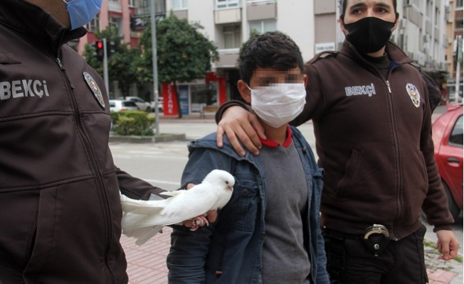 Sokağa Çıkma Kısıtlamasında Güvercinle Yakalandı