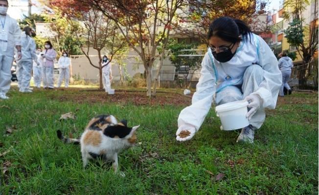 Yenişehir Belediyesi Sokak Hayvanlarını Yalnız Bırakmadı