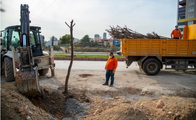 Büyükşehir Belediyesi, 26. Caddedeki ağaçları Koruma Altına Aldı