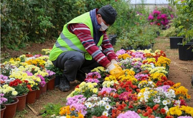 Erdemli Belediyesi Yılda 20 Bin Bitki Üretiyor
