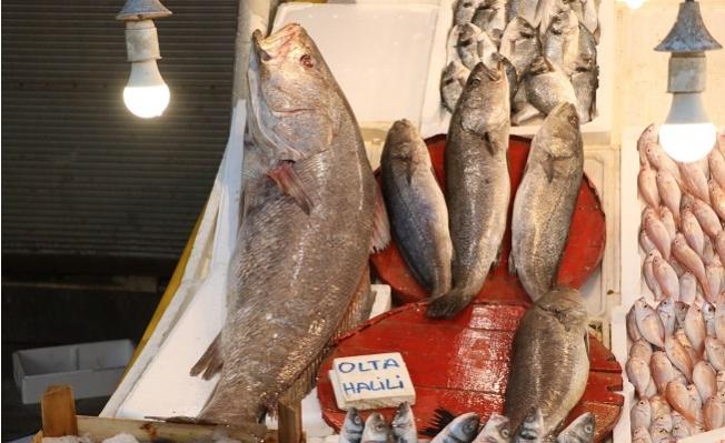 Köpek Balığı Değil 1,5 Metre Boyunda Halili