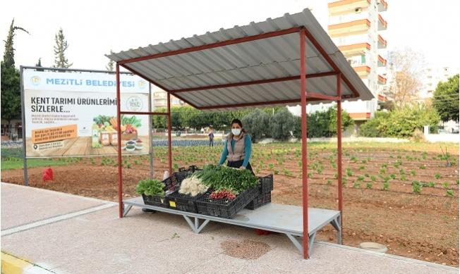 Mezitli'de Tarlada Üretip Yanı Başında Satıyor