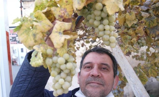 Tarsus'ta Kışın Ortasında Dalında Üzüm Yetişiyor