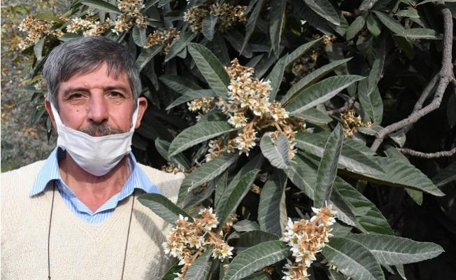 Tarsus'ta Kış Ortasında Yeni Dünya Ağaçları Çiçek Açtı