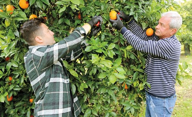 Alın Teri Ekiyor, Meyvelerini e-Ticaretle Topluyorlar.