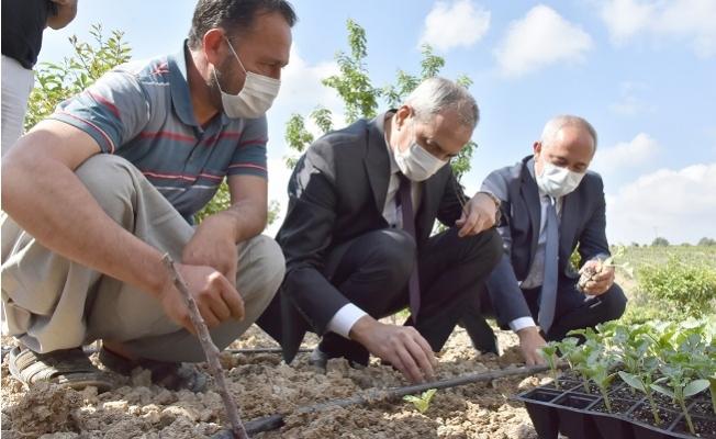 Başkan Bozdoğan, Yerli Tohumları Toprak İle Buluşturdu.