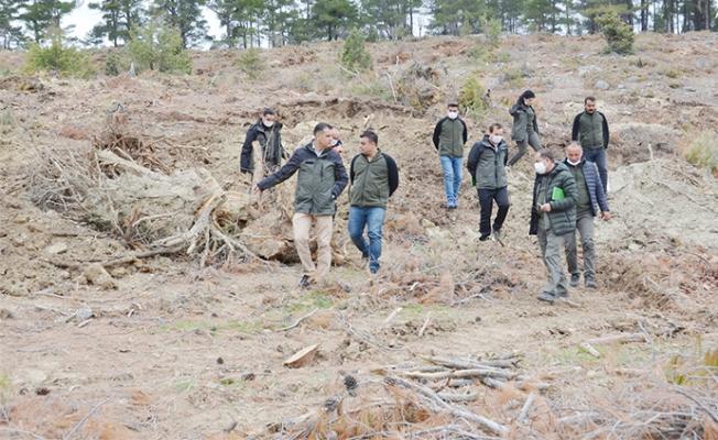 Mut'ta 40 Hektarlık Alanda Ağaçlandırma Çalışması