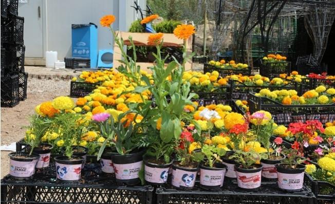 Başkan Yılmaz'dan Annelere 110 Bin Çiçek