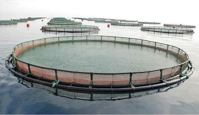 Danıştay, Mersin'deki Balık Çiftliklerine Dur Dedi.