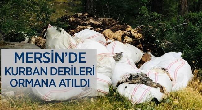 Kurban Derileri Ormanlık Alana Atıldı!