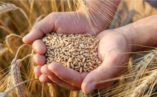 """""""Sertifikalı Tohum ile Tarımsal Üretimde Verimi Artırmalıyız"""""""