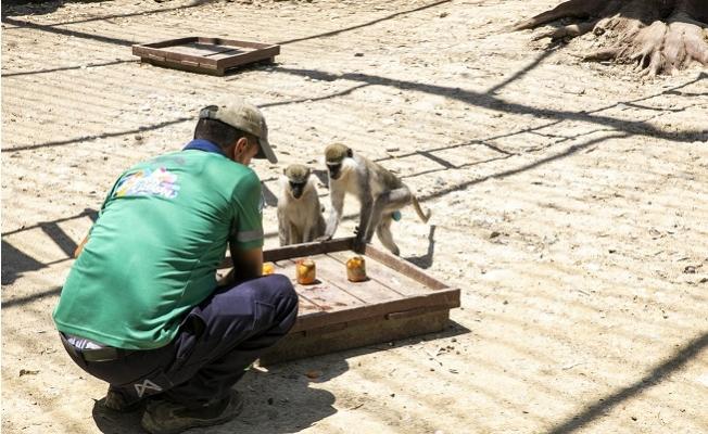 Tarsus Doğa Parkı Sakinleri İçin Özel Serinletme Yöntemleri Kullanılıyor