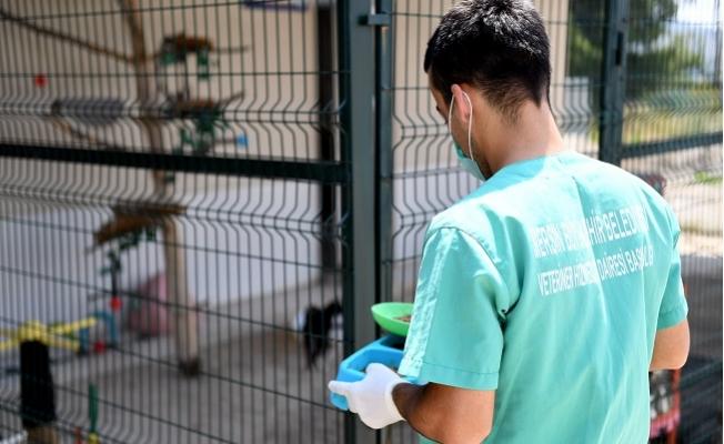 Kaşlı Hayvan Bakımevi, Koronavirüs Nedeniyle 1 Eylül Kadar Kapalı