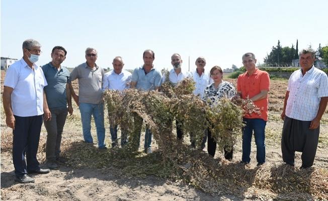 Tarsus Belediyesi Hasat Şöleni Devam Ediyor