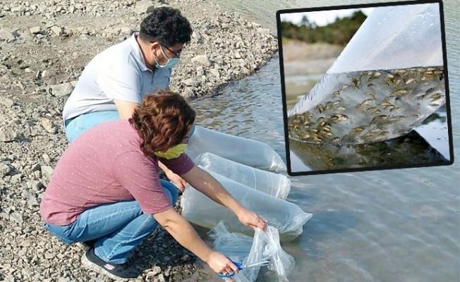 Mersin'de Su Kaynaklarına Balık Takviyesi