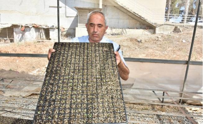Tarsus Belediyesi Zehirsiz Mutfaklar Yaratmak İçin Ücretsiz 700 Bin Fide Dağıtacak