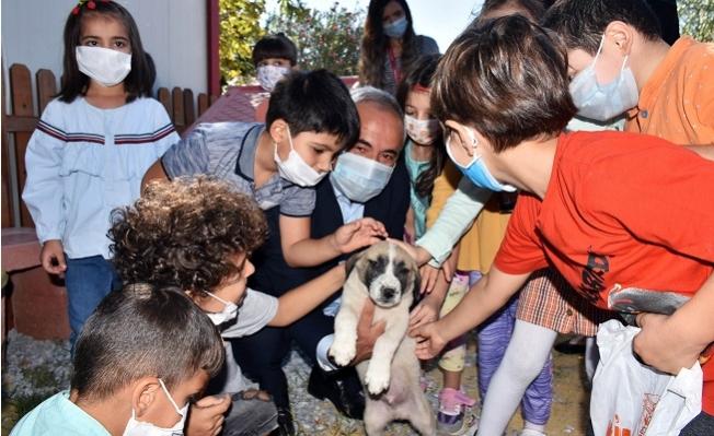 Tarsus Belediyesi Minikleri Patili Dostları İle Buluşturdu
