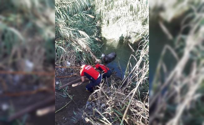 Tarsus'ta Sulama Kanalına Düşen Atı İtfaiye Kurtardı.