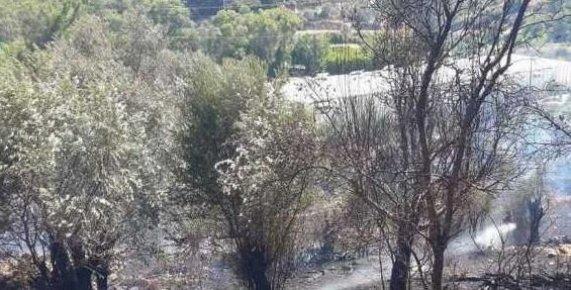 Anamur'da Zeytinlik Yangını Korkuttu