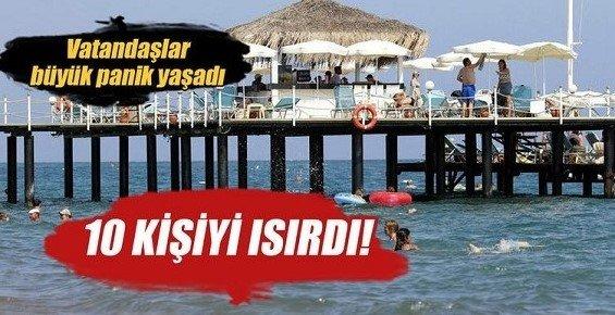 Antalya'da 10 Kişiyi Caretta Caretta Isırdı