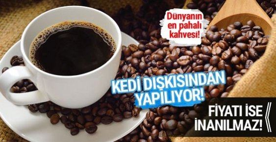 Bu Kahve Kedi Dışkısından Yapılıyor Fiyatı İse İnanılmaz!