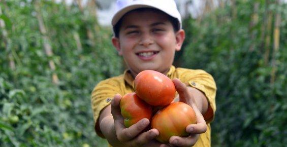 Çamlıyayla'da Çiftçilerin İlk Domates Hasadı Sevinci
