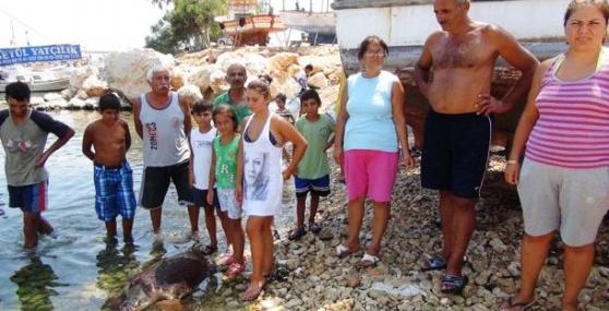 Caretta Carettalar Denize Girenlere Saldırdı