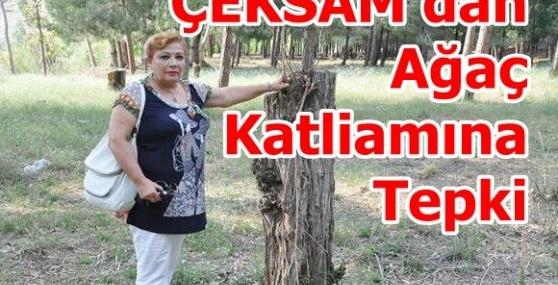 ÇEKSAM'dan Ağaç Katliamına Tepki