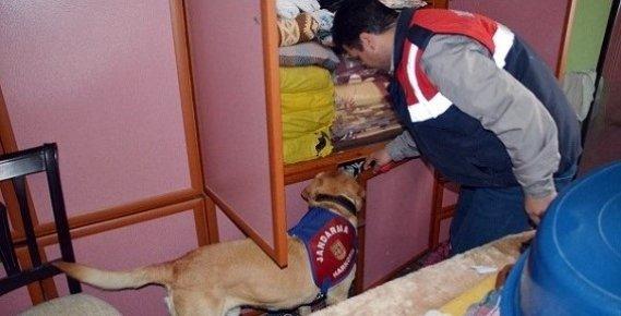 Detektör Köpekli Uyuşturucu Operasyonu