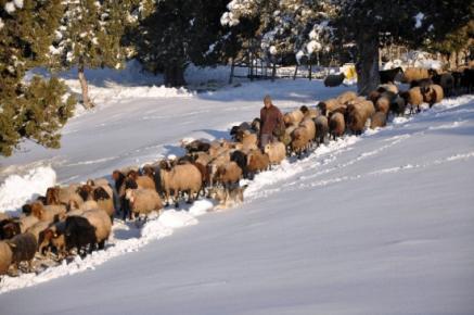 Erdemli'de Kar Yaşamı Felç Etti