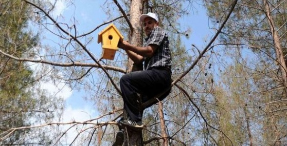 Faydalı Böcekler Doğaya Bırakıldı