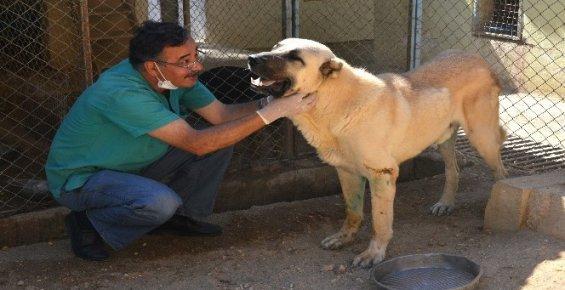 Felçli Sokak Köpeği Hayvan Barınağında Sağlığına Kavuştu