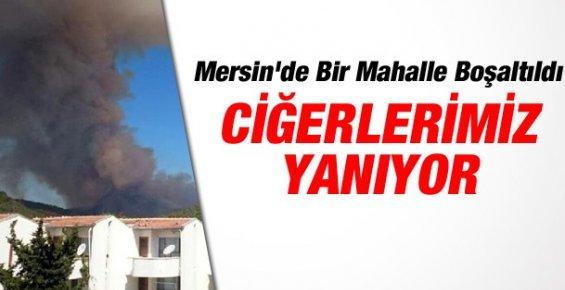 Mersin'deki Orman Yangınında 40 Hektar Alan Zarar Gördü