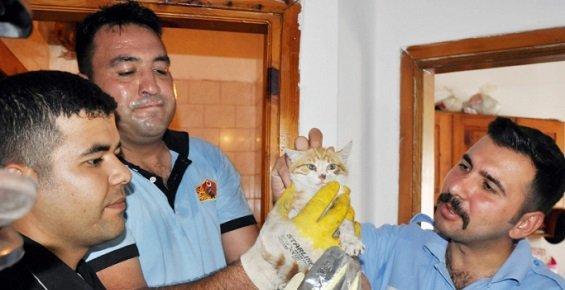 Havalandırma Boşluğuna Düşen Kedi Operasyonla Kurtarıldı