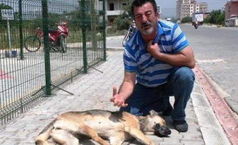 İşkence ile Öldürülen Köpeğe Ağladı