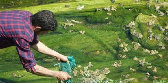 Kaçak Kurbağa Toplayanlara 81 Bin Llira Ceza