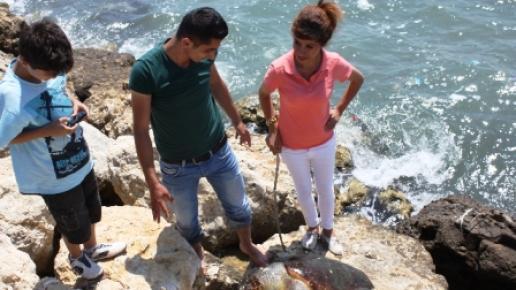 Kafasında Yaralar Bulunan Caretta Ölüsü Kayalıklara Vurdu