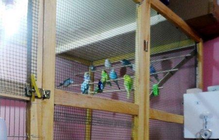 Kuş Severler Derneğine Kumar Operasyonu