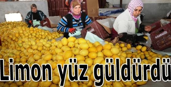 Limon Üreticisinin Yüzü Güldü
