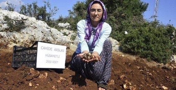 Mersin Büyükşehir Belediyesi, 50 Bin Nergis Soğanı Dağıttı