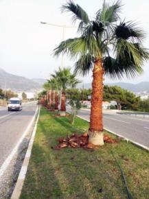 Mersin BÜyükşehir Belediyesi Aydıncık'ı Renklendiriyor