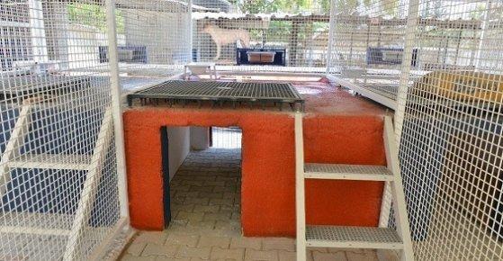 Mersin Büyükşehir'den Otel Konforunda Yeni Köpek Padokları