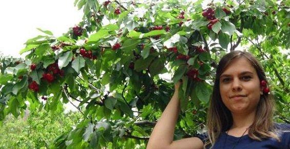 Mersin Silifke'de Sezonun Ilk Kiraz Hasadı Başladı