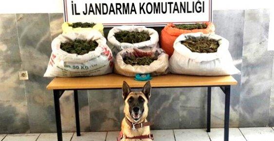 Mersin'de 14 Kilo Esrar Yakalandı