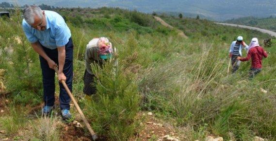 Mersin'de 179 Hektar Alanda Dikili 306 bin Kızılçam Fidanına Bakım Yapılıyor