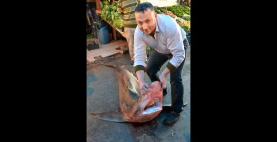 Mersin'de 4 Metrelik Köpek Balığı Yakalandı