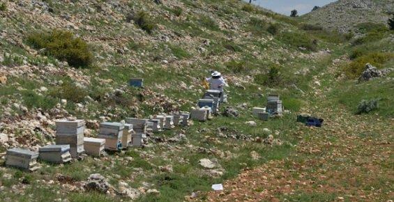 Mersin'de Bal Ormanları Gelirinde Hedef 45 Milyon lira