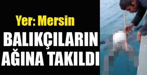 Mersin'de Balıkçı Ağına Ceset Takıldı