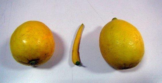 Mersin'de Biber Görünümlü Limon