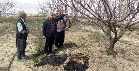 Mersin'de Çiçek Açan Kayısıyı Don Vurdu